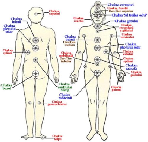 chakra genunchilor-sistem.png